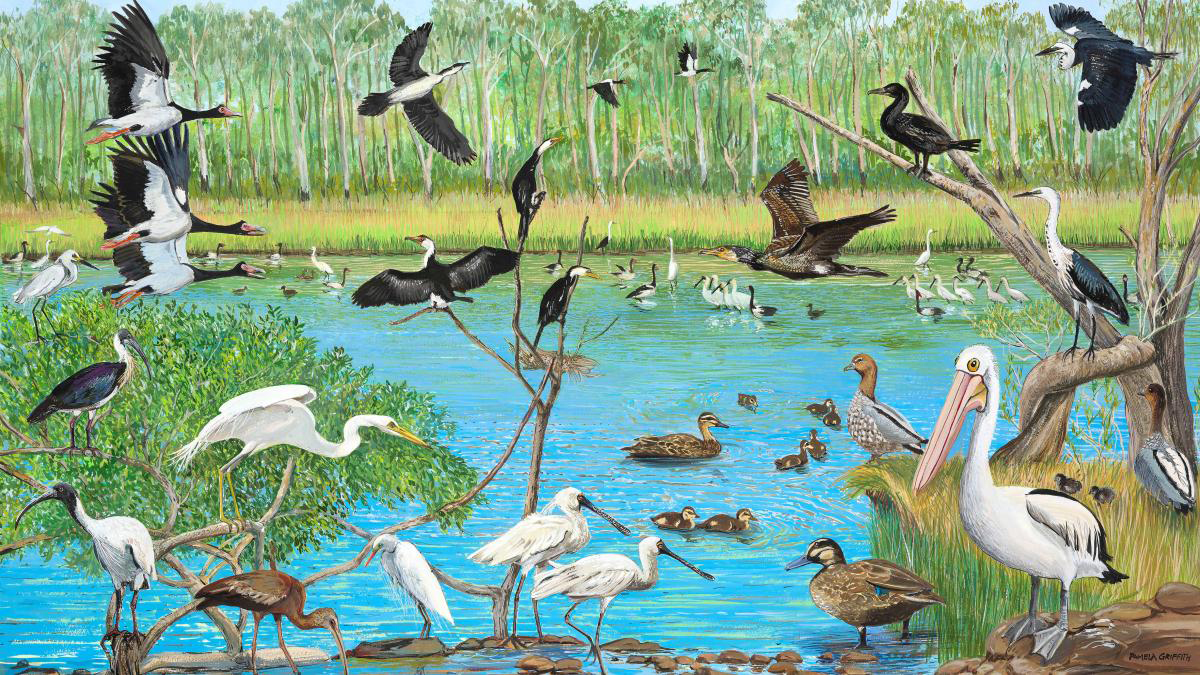 How art and science collaborated to save the wetlands